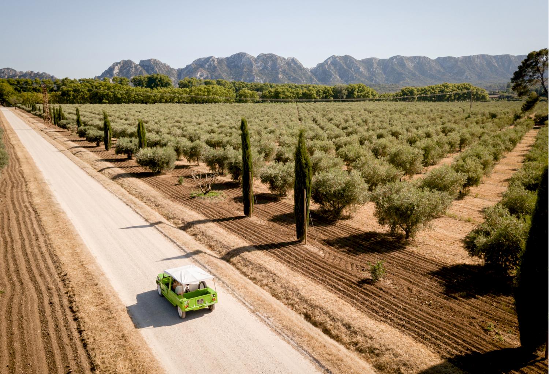 Méhari au milieu des oliveraies
