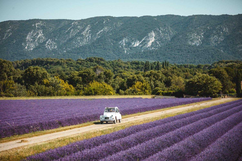 Champs de lavande et 2CV en Provence