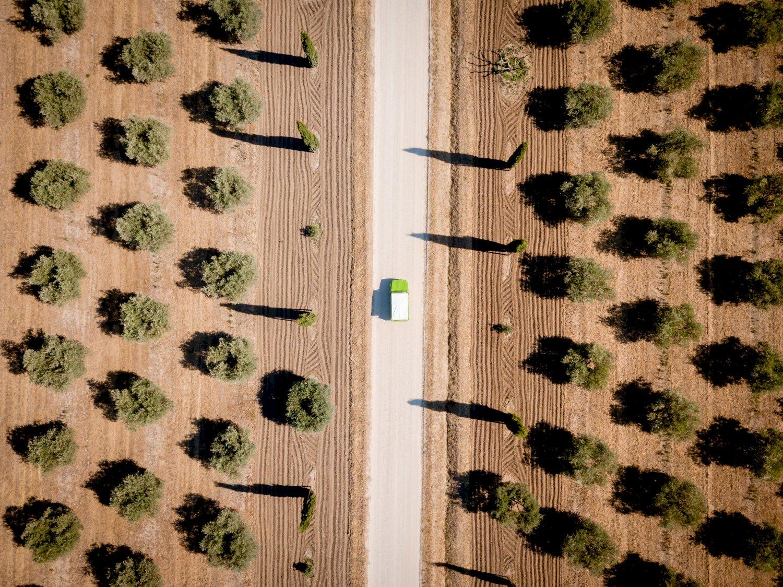 Méhari dans les oliviers en Provence