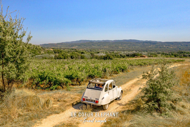 Deux chevaux en Provence