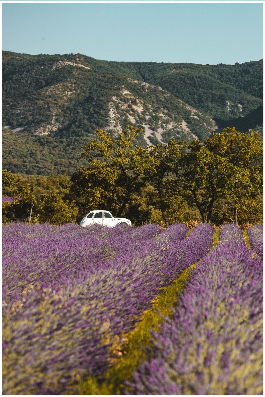 Location 2CV en Provence dans les lavandes