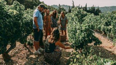 Wine Vintage Tour dans les Dentelles de Montmirail en voiture vintage : 2cv, Méhari, Coccinelle ou combi Van