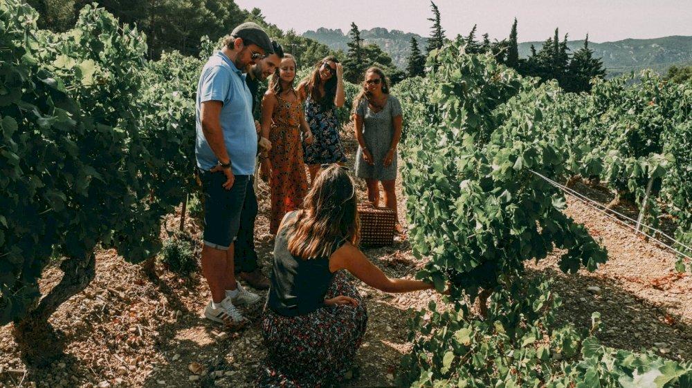 Wine Vintage Tour en Combi Van Volkswagen en Provence